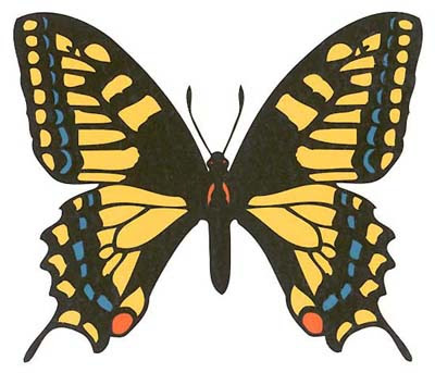 try-a-3d-butterfly-tattoo-design