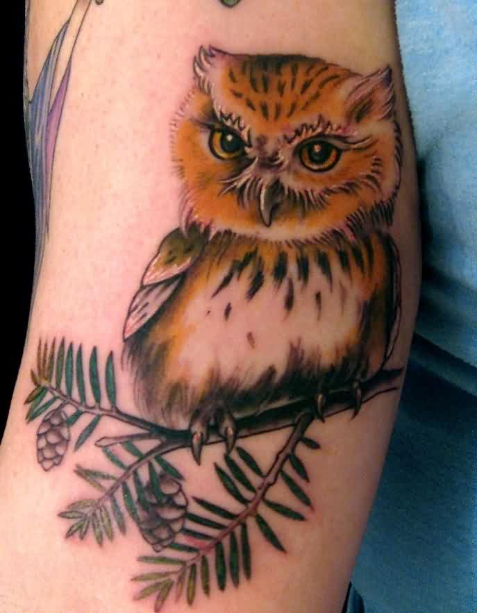 Amazing Cute Owl Tattoo On Arm