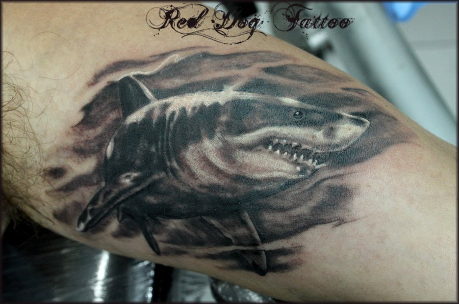 Amazing Original Grey Shark Tattoo