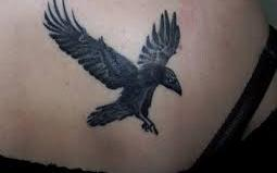 Awesome Flying Crow Tattoo On Right Back Shoulder