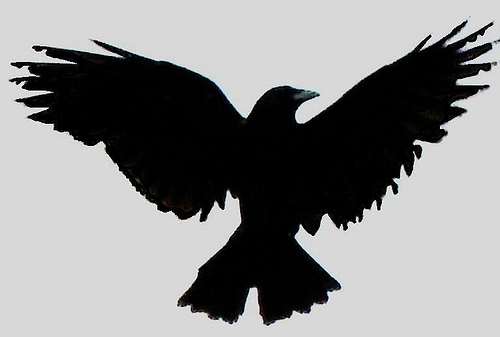 Black Ink Crow With Open Wings Tattoo Design