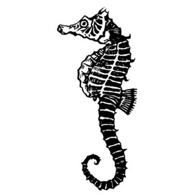 Black White Seahorse Tattoo Version