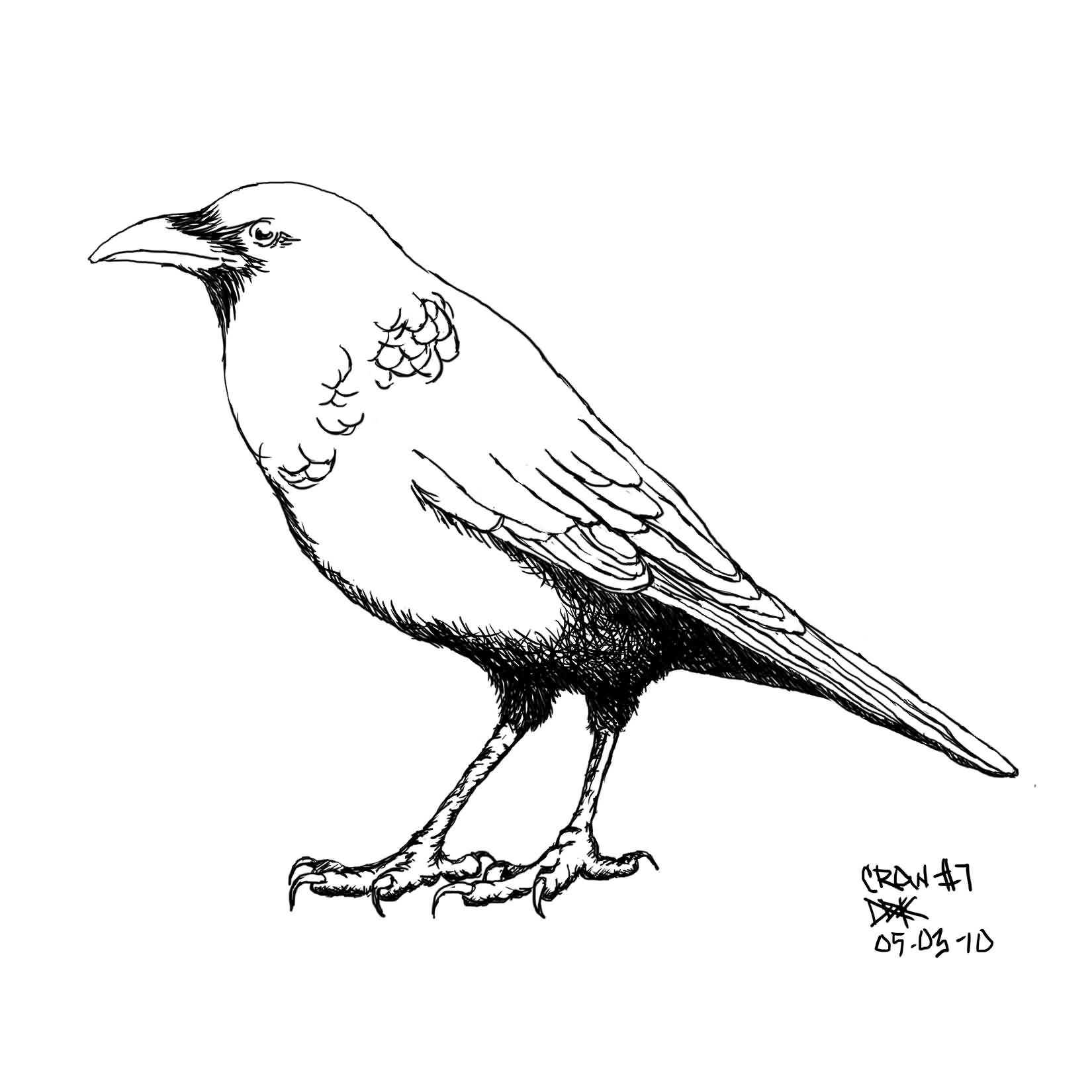 Crow Tattoo Sample (3)
