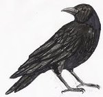 Crow Tattoo Sample