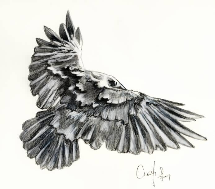 Crow Tattoo Sketch (2)