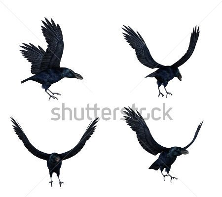 Crows Flight Tattoos Set
