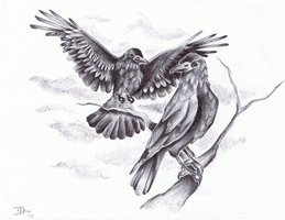 Crows Tattoos Drawing