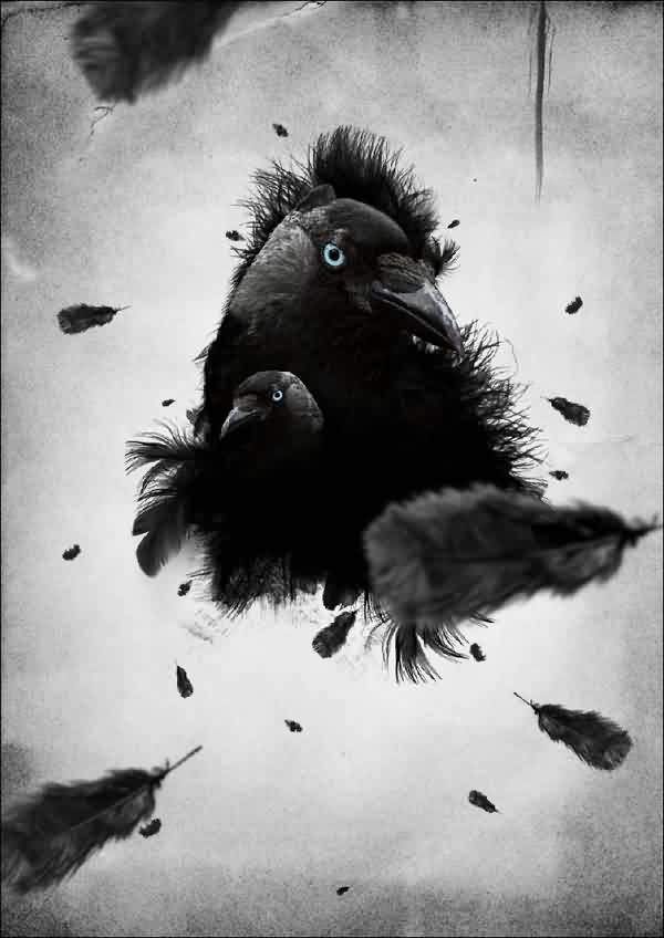 Dark Black Crows And Feather Tattoo Design