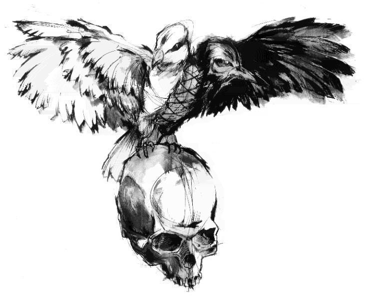 Dove Crow On Skull Tattoo Drawing