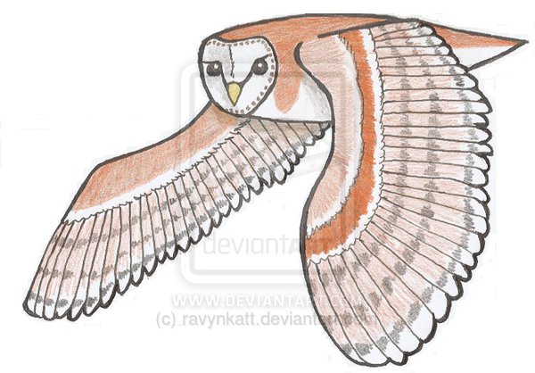 Flying Barn Owl Tattoo Design