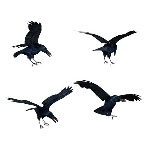 Flying Crows Tattoos Set