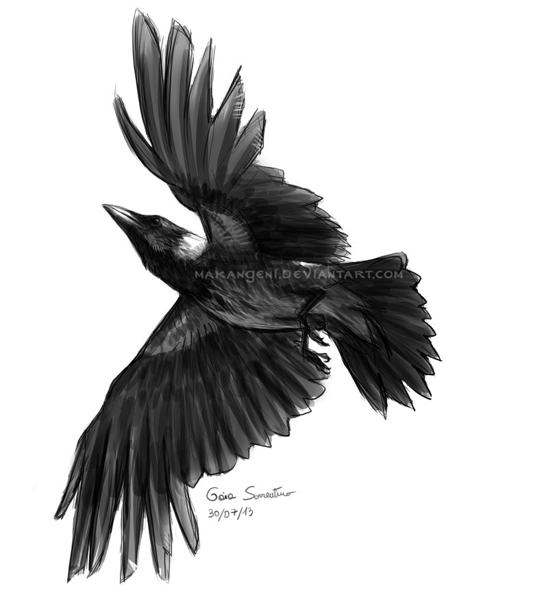 Flying Hooded Crow Tattoo Sketch