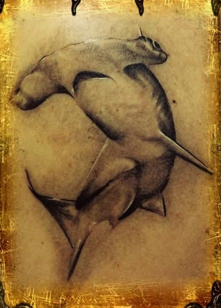 Grey Hammerhead Shark Tattoo Photo