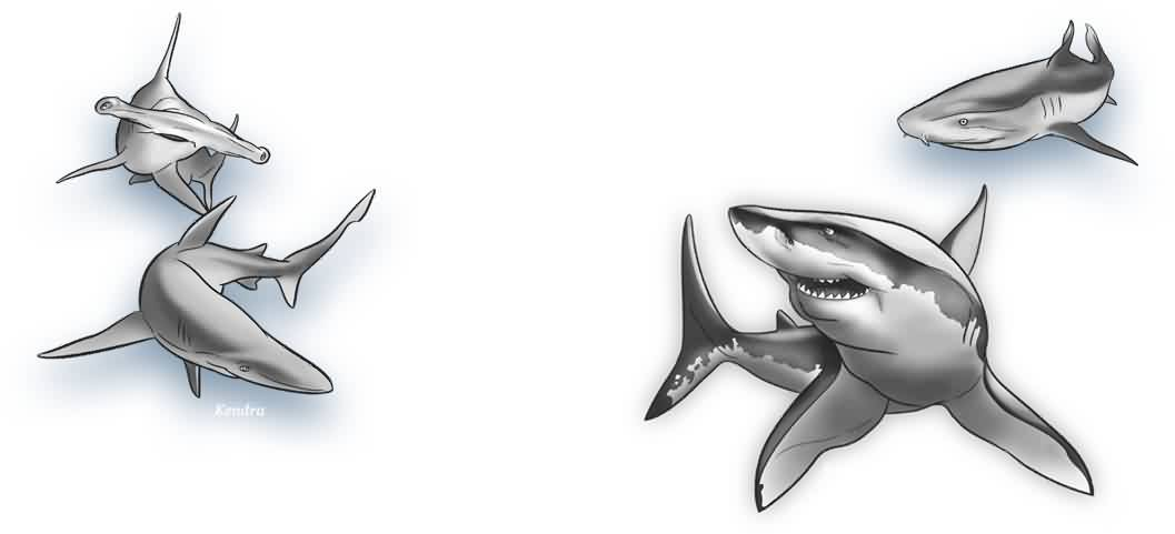 Grey Sharks Tattoo Designs