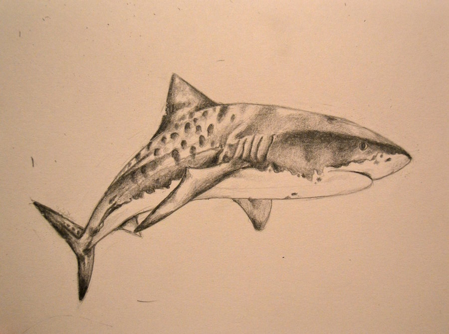 Grey Tiger Shark Tattoo Print