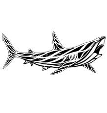 Latest Open Mouth Shark Tattoo Design