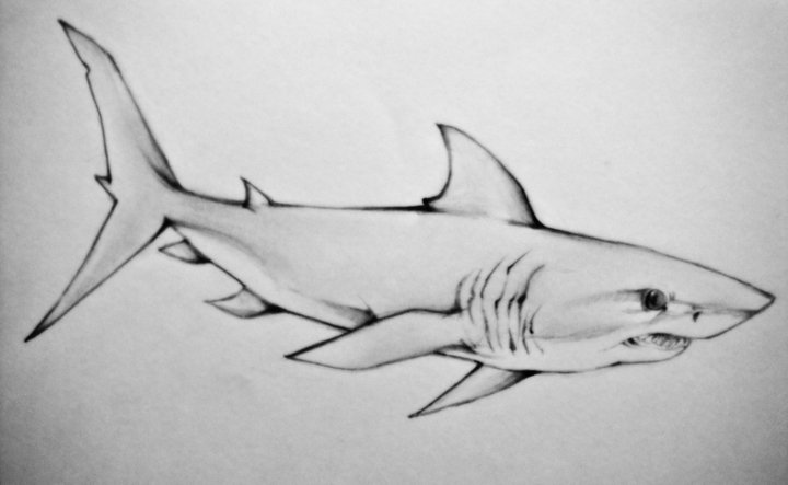 Mako Shark Tattoo Design
