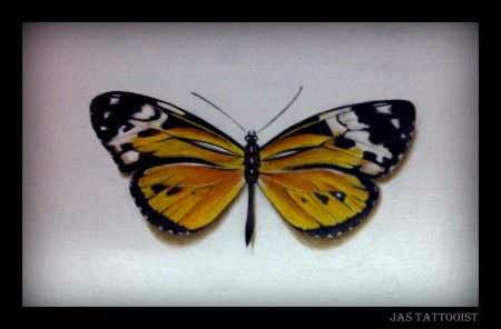 New 3D Butterfly Tattoo Photo
