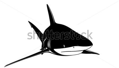 New Release Shark Tattoo Design