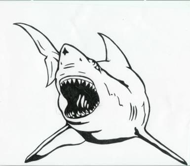 Open Mouth Shark Tattoo Design