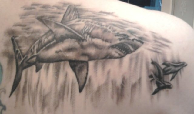 Original Grey Shark Tattoos For Men