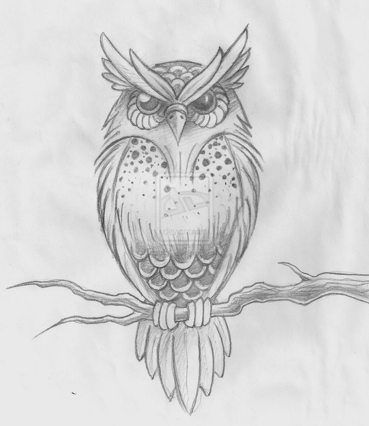 Owl On Branch Tattoo Drawing