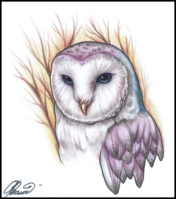 Owl Tattoo Photo