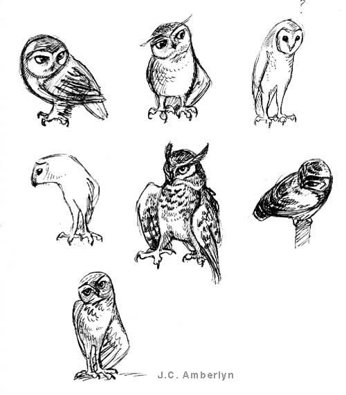 Owl Tattoos Drawing