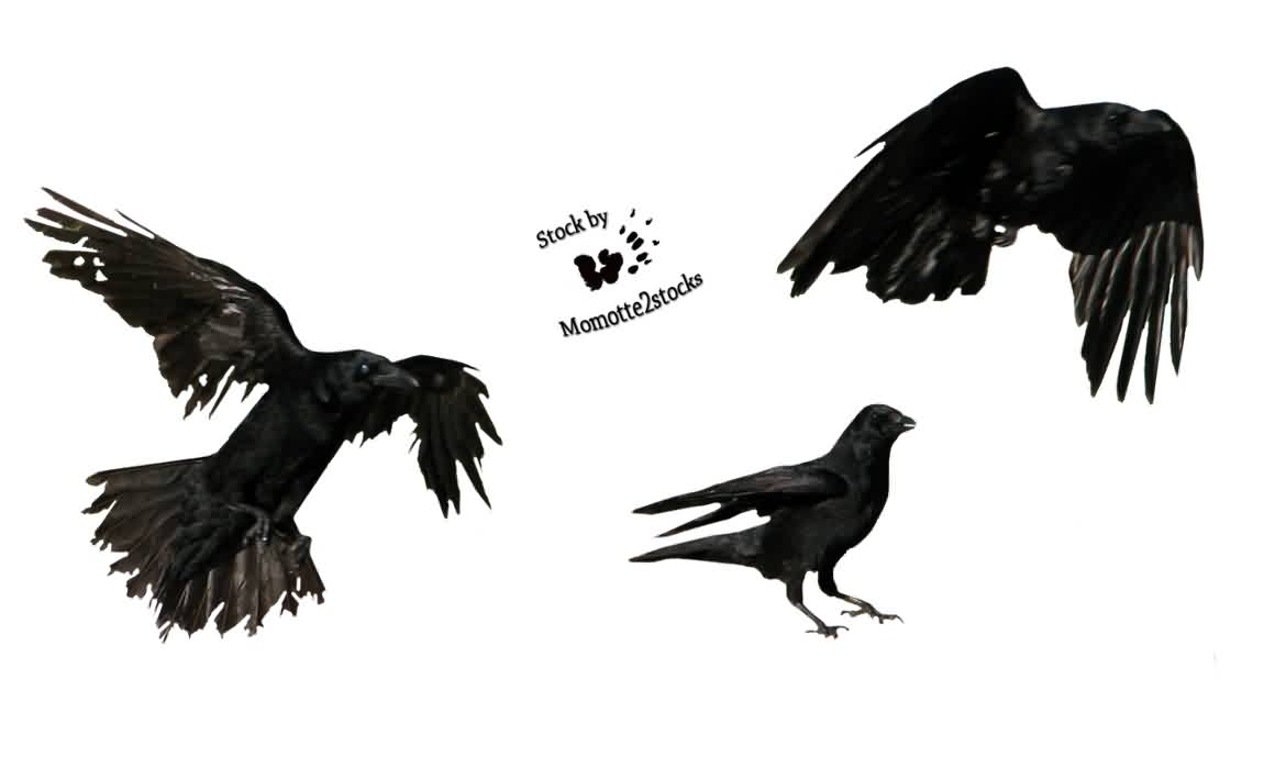Pack Of 3 Crows Tattoo Design