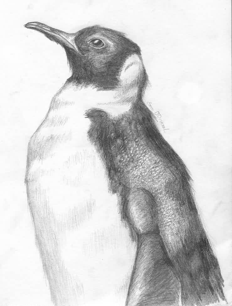 Penguin Tattoo Sketch