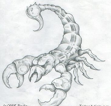 Alien Scorpion Tattoo Drawing