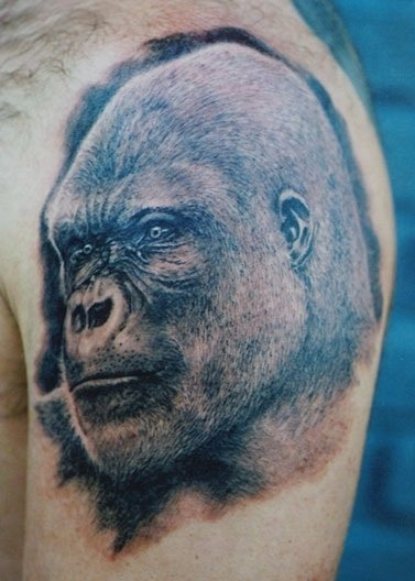 Amazing Gorilla Portrait Tattoo On Shoulder