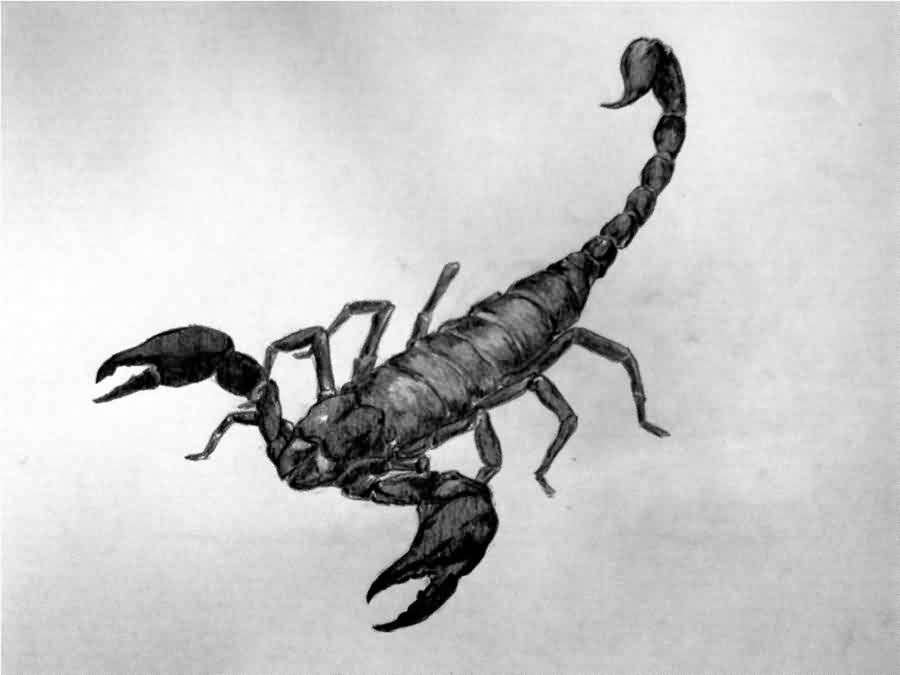 Black Scorpion Tattoo Sketch