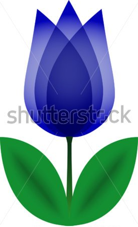 Blue Tulip Tattoo Photo