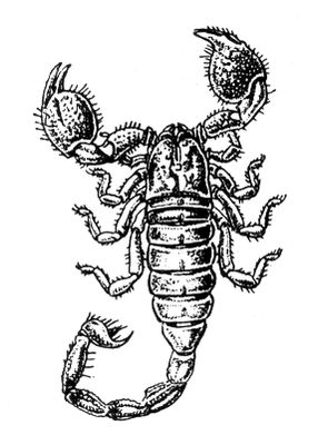 Crab Scorpion Tattoo Design