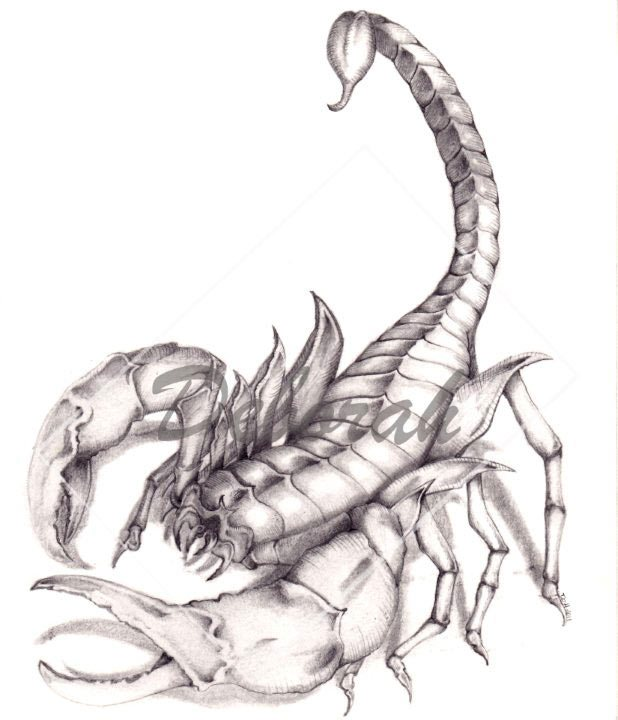 Free Grey Scorpion Tattoo Design