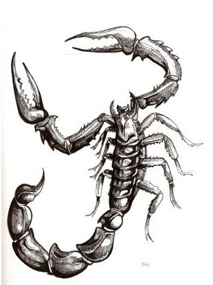 Grey Scorpion Tattoo Design (2)
