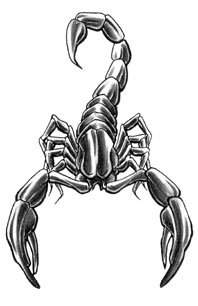 Grey Scorpion Tattoo Design