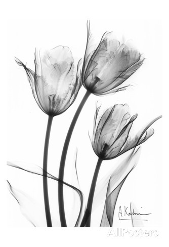 Grey Tulips Tattoo Drawing