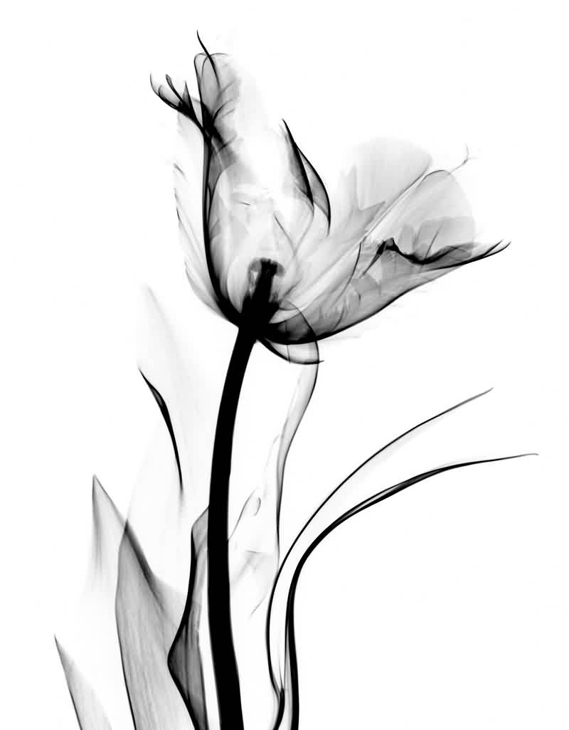 Koetsier Albert Tulip Tattoo Design