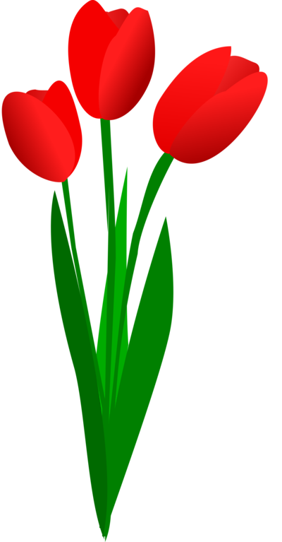 Latest Red Tulips Tattoo Design