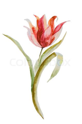 New Tulip Tattoo Design
