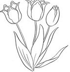 Outlined Tulip Flower Plant Sample