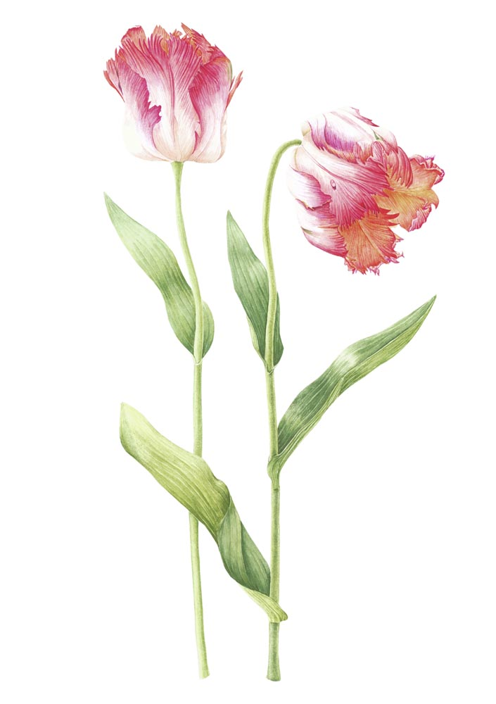 Parrot Tulip Tattoo Designs