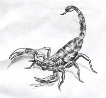Pencil Scorpion Tattoo Sketch