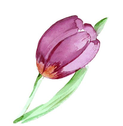 Pink Tulip Tattoo Preview