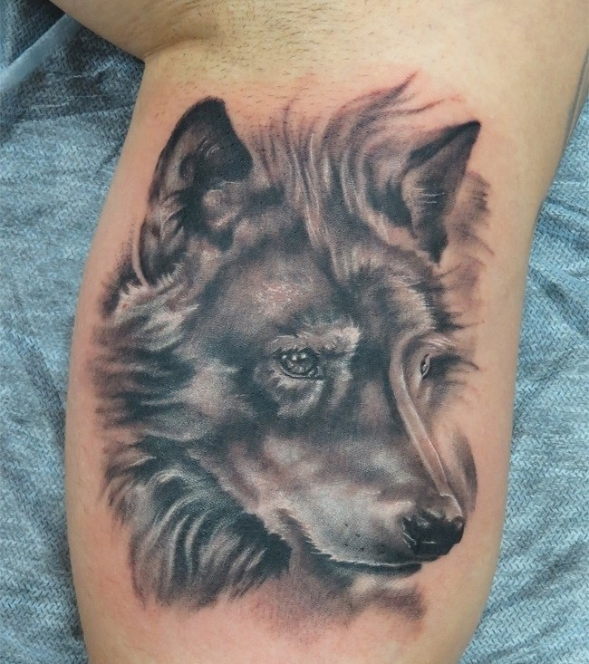 Realistic Grey Wolf Face Tattoo On Inner Muscles