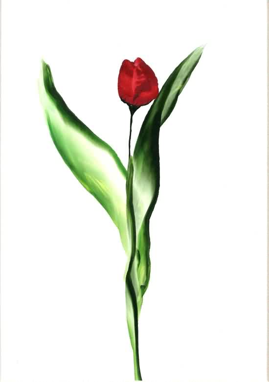 Red Tulip Flower Tattoo Design