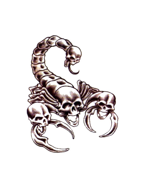 Scorpion Skulls Tattoo Model