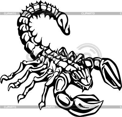 Scorpion Tattoo Photo